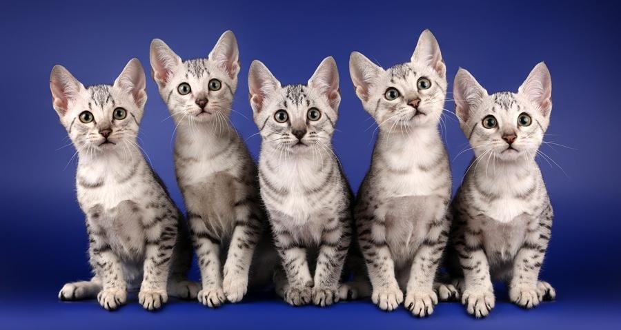 котята - фото